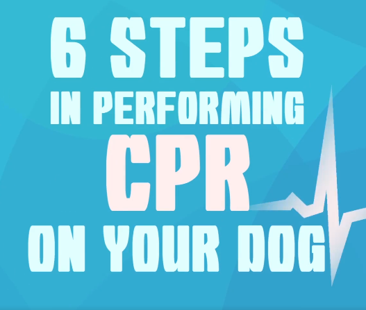 6 steps to dog cpr