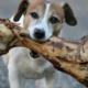 Fatal mistake with dog bones