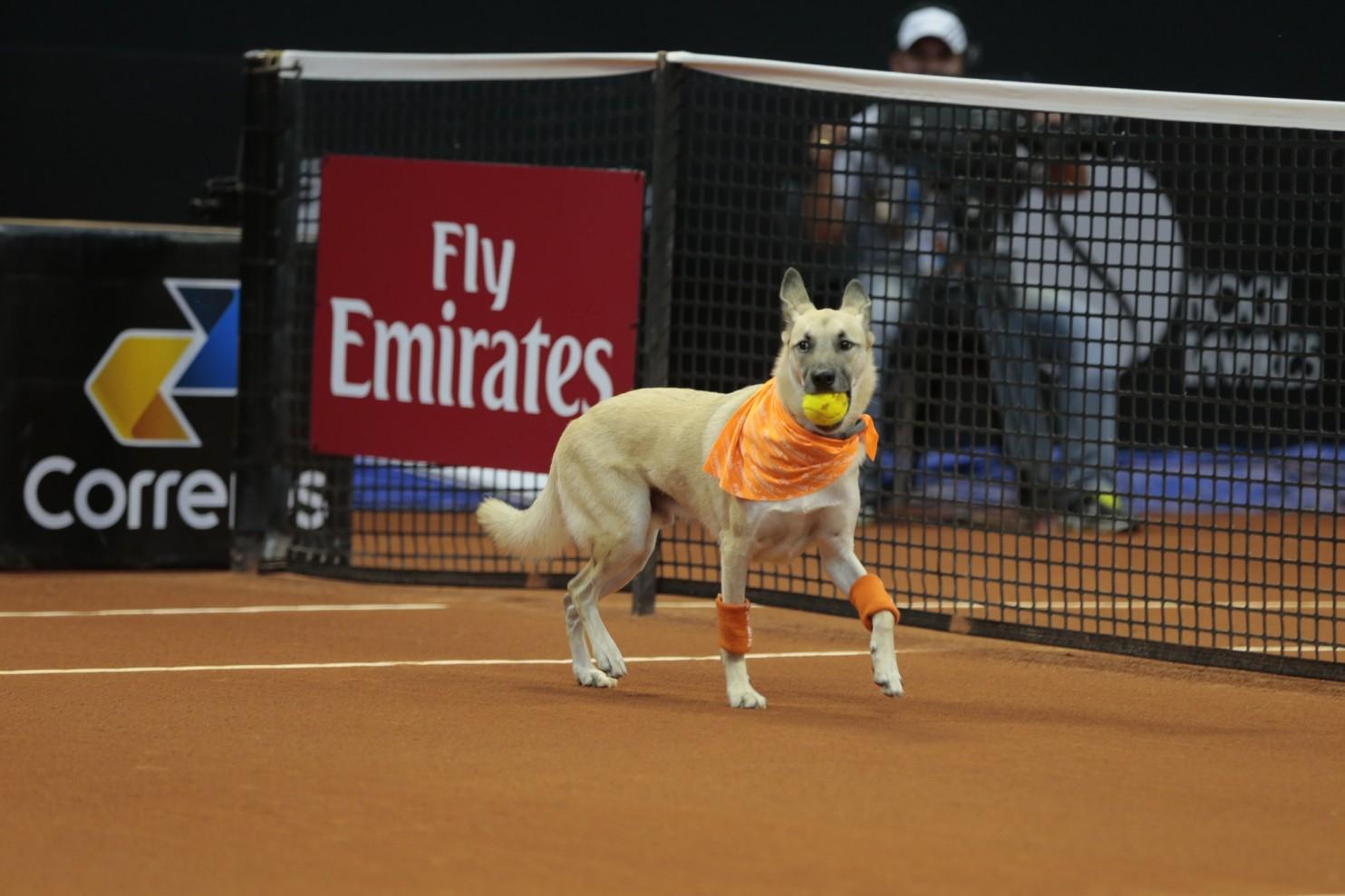 brazil open tennis dog fetcher