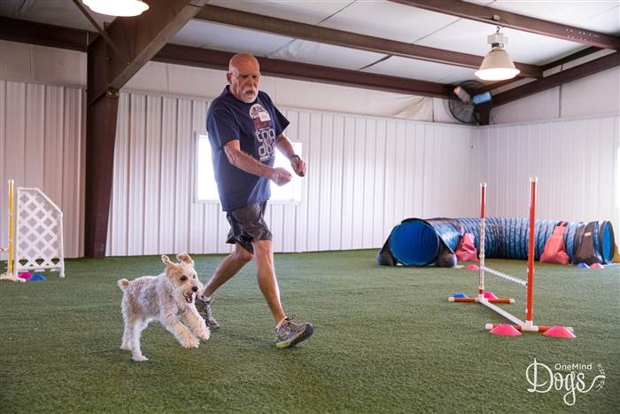 dog and his veteran in agility training
