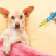 over vaccination does your dog suffer from it