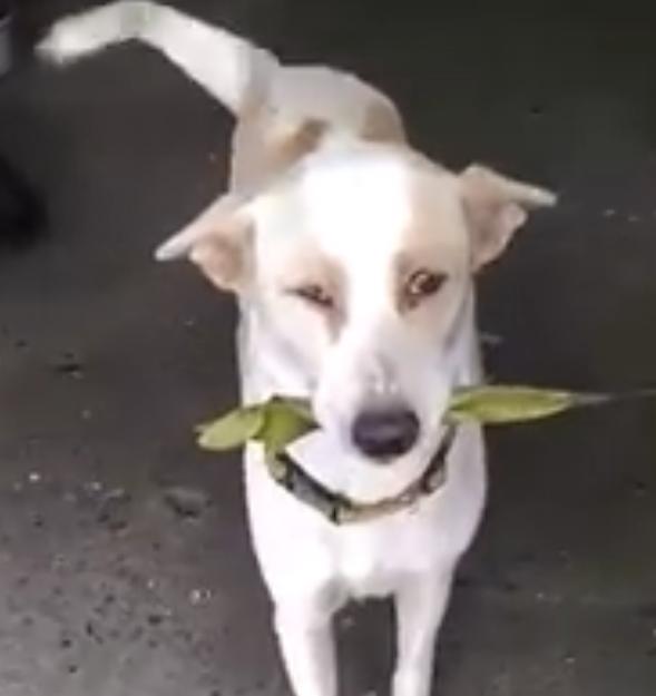 dog_trades_leaf_for_food