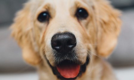 Happy Dog with positive training