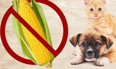say no to corn for dogs and cats