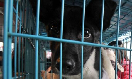 taiwan prohibits dog cat meat sale