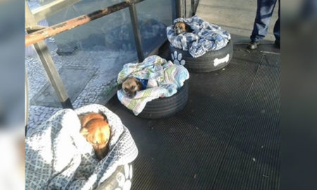 Stray Dogs Getting Shelter at Bus Station