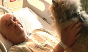 tornado victim has reunion with lost dogs